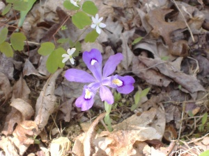 2009_april_hiking 032