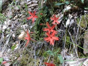 2009_april_hiking 064