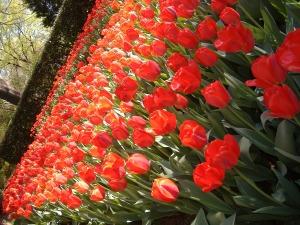 Memorial Gardens - 2011 021