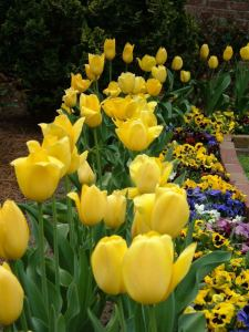 Flowers in Memorial Gardens near downtown Concord, NC offer an escape from the city.