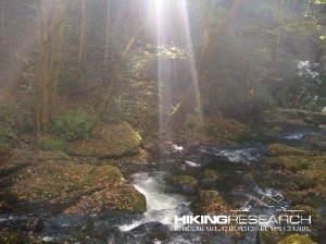 Sunlight on a mountain stream (North Carolina) Photo by Mark Ellison